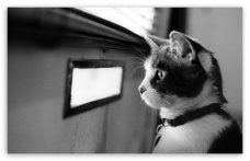 waiting cat